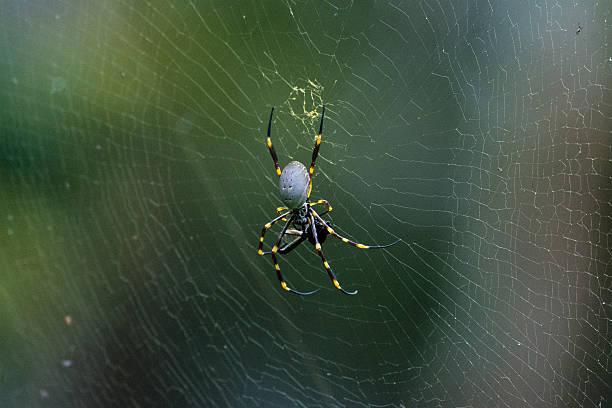 Spinnen-Webstreifen – Foto