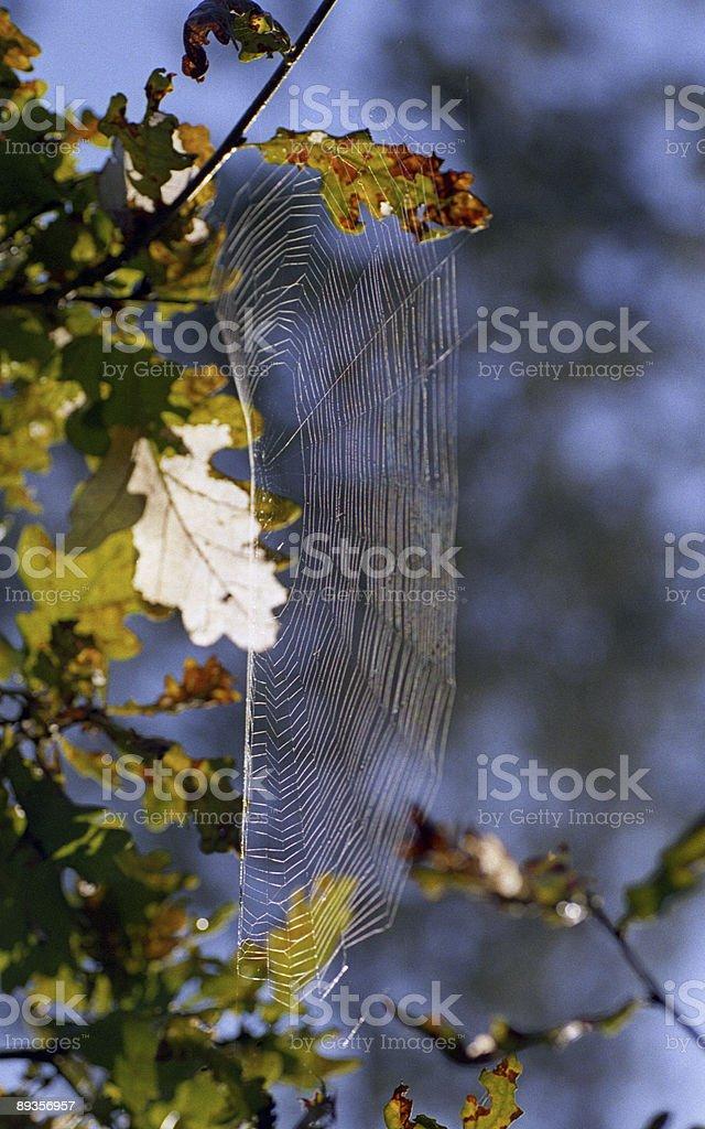 spider'sweb zbiór zdjęć royalty-free