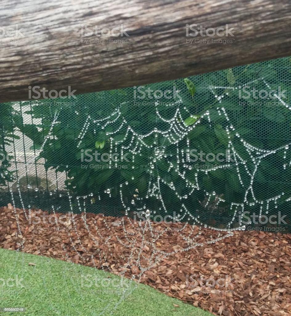 Spiderweb after rain 免版稅 stock photo