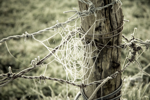 Spiderweb frozen and barbed wire in a wooden trunk