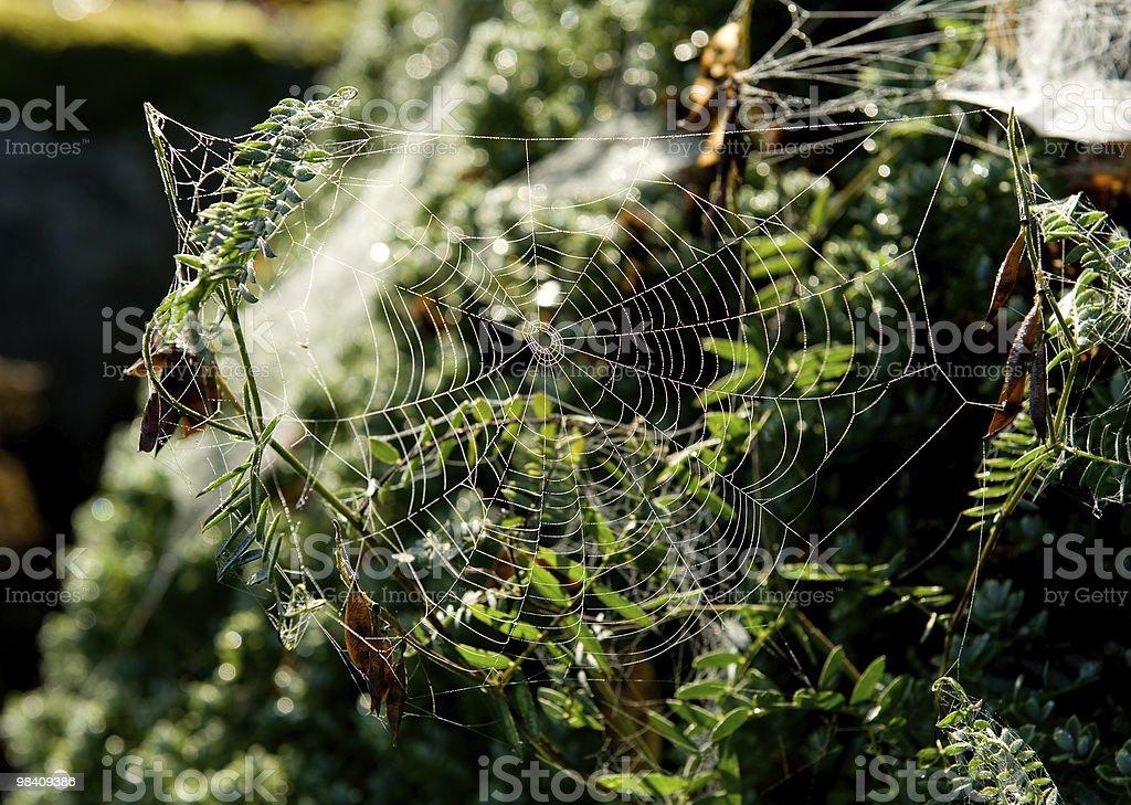 Spiderweb 아침에 royalty-free 스톡 사진