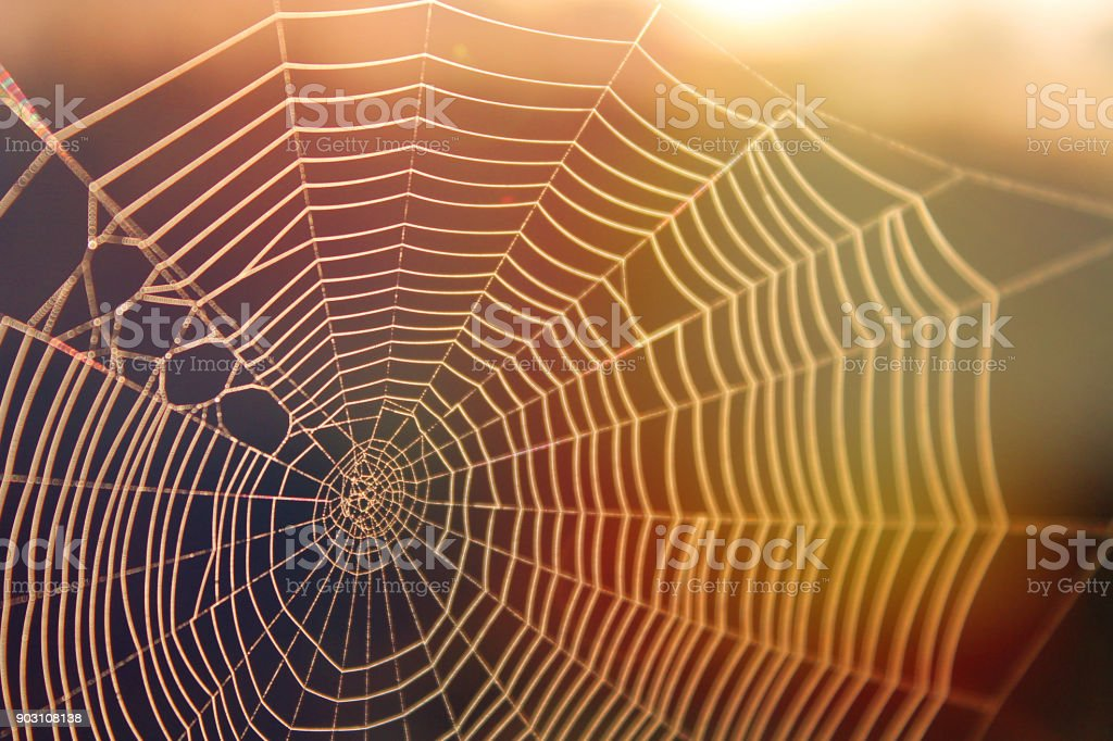 Spiderweb in the Sunshine with Colorful Rays of Light in Red and Yellow stock photo