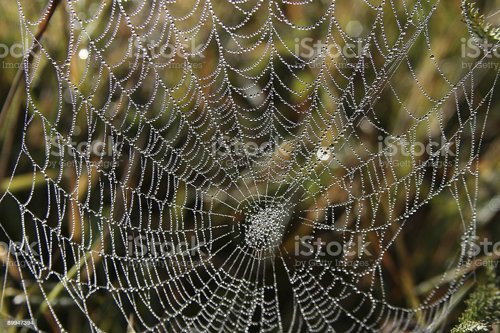 Spider-Web royalty-free stock photo