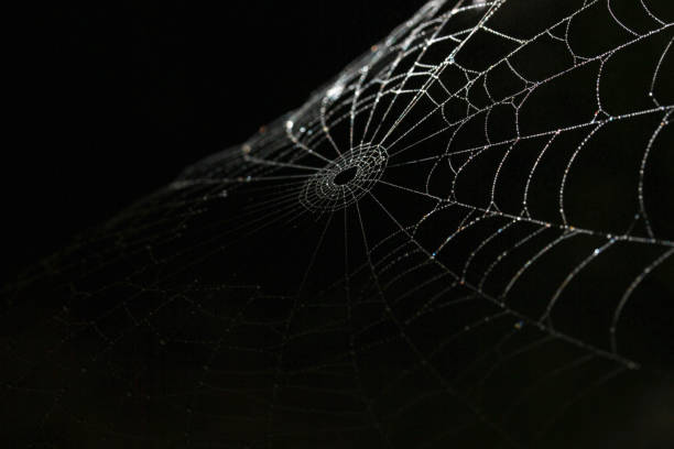 spiderweb silk details on black background - spider web stock photos and pictures