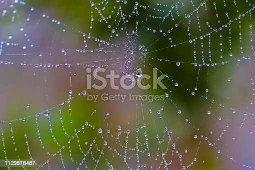 Spiderweb in the backyard with dew drops