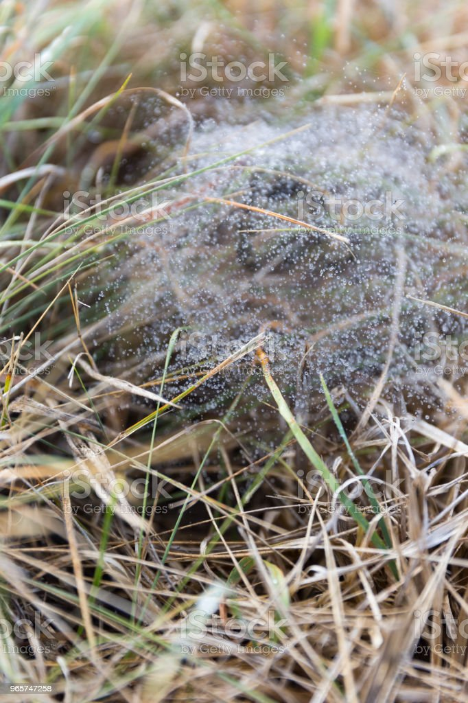 Spiderweb With Water Droplets - Royalty-free Animal Nest Stock Photo