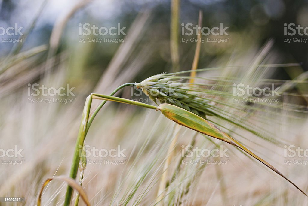 Spike stock photo