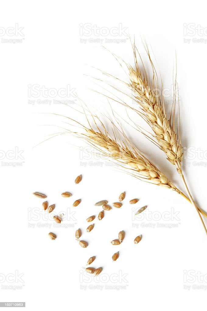 spikelets and grains of wheat on a white background stock photo