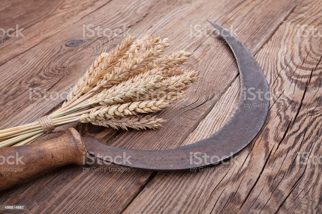 spikelets and siskle on old boards stock photo