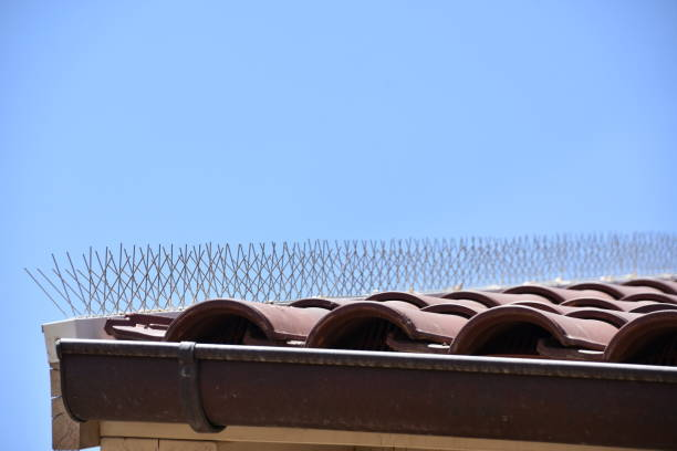 Spikes against pigeons on the roof Spikes against pigeons on the roof spiked stock pictures, royalty-free photos & images