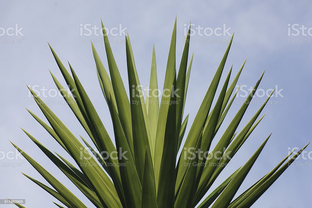 Spikey Plant stock photo