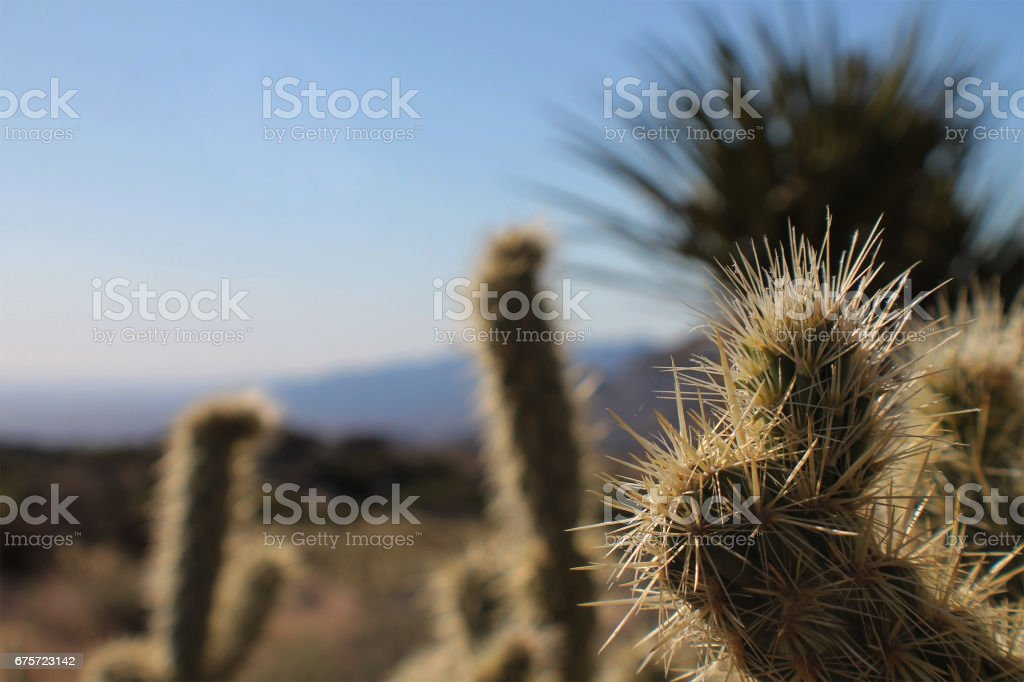 Spiky Cactus Close-Up stock photo