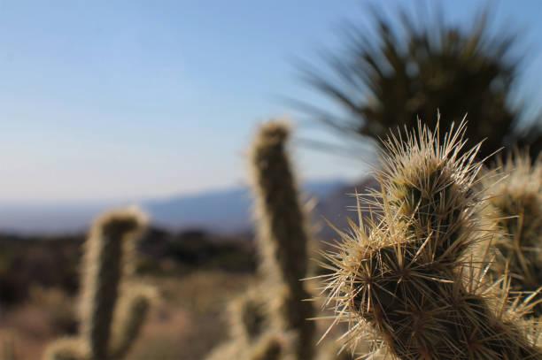 Spiky Cactus Close-Up stock photo
