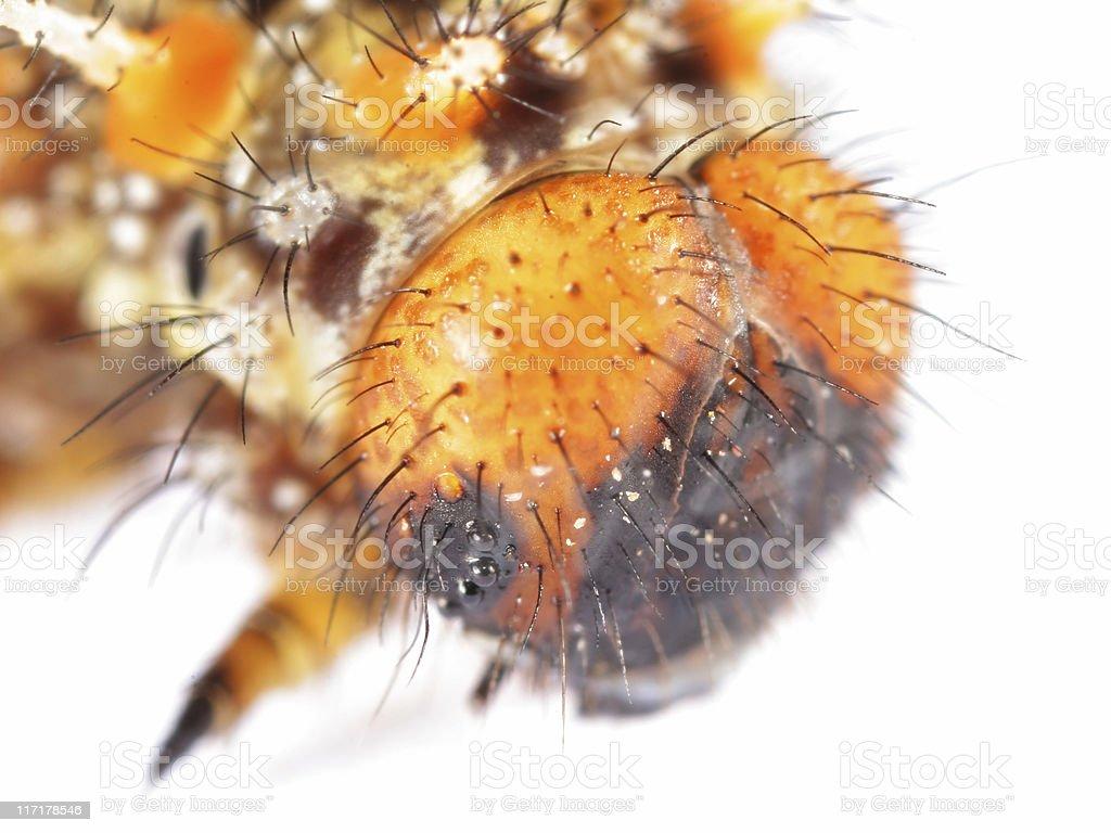 Spiky caterpillar stock photo
