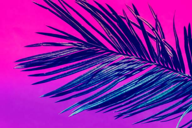 Spiky gefiederte Palmblatt auf Duoton lila violett rosa Hintergrund. Trendige Neonfarben. Getönten. Minimalistischer Stil. Zeitgenössische einzigartige kreative Bild Poster Streamer Design-Vorlage. Tropisches Thema – Foto