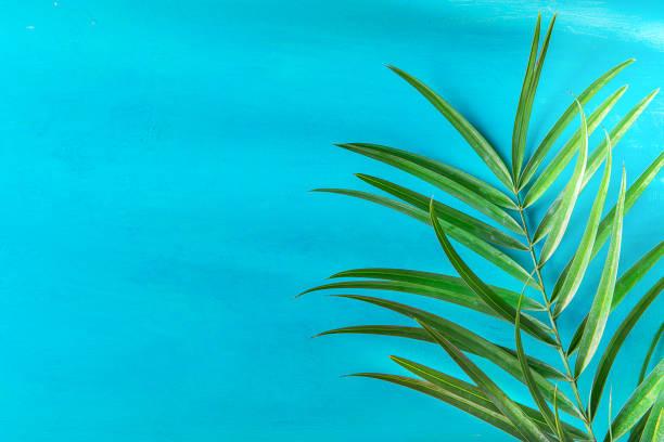 尖刺的棕櫚樹葉子在繪的淺藍色牆壁背景。明亮的早晨陽光洩露。時髦的風格柔和的色彩。海濱度假樂趣癖時尚理念。複製空間 - 熱帶式樣 個照片及圖片檔