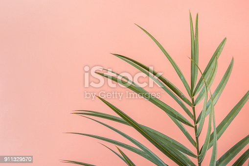 istock Spiky Palm Tree Leaf on Pink Peachy Wall Background. Room Plant Interior Decoration. Hipster Funky Style Pastel Colors. Seaside Vacation Fun Wanderlust Fashion Concept. Copy Space 911329570