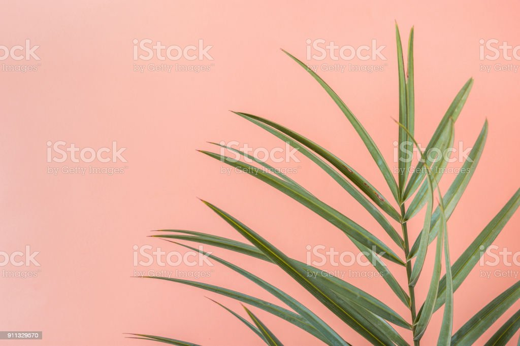 Spiky Palm Tree Leaf on Pink Peachy Wall Background. Room Plant Interior Decoration. Hipster Funky Style Pastel Colors. Seaside Vacation Fun Wanderlust Fashion Concept. Copy Space - foto stock