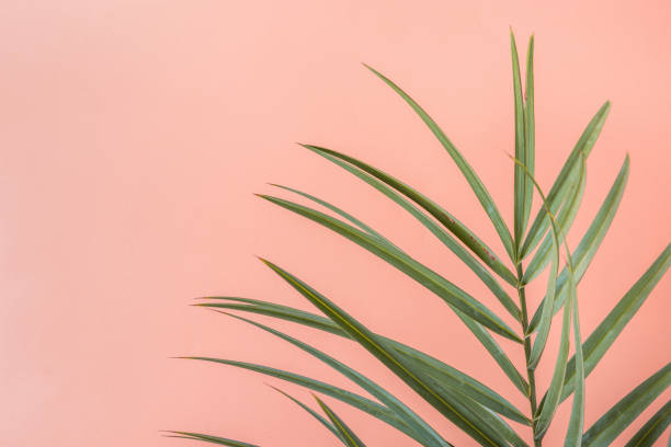 Spiky Palm Tree Leaf on Pink Peachy Wall Background. Room Plant Interior Decoration. Hipster Funky Style Pastel Colors. Seaside Vacation Fun Wanderlust Fashion Concept. Copy Space stock photo