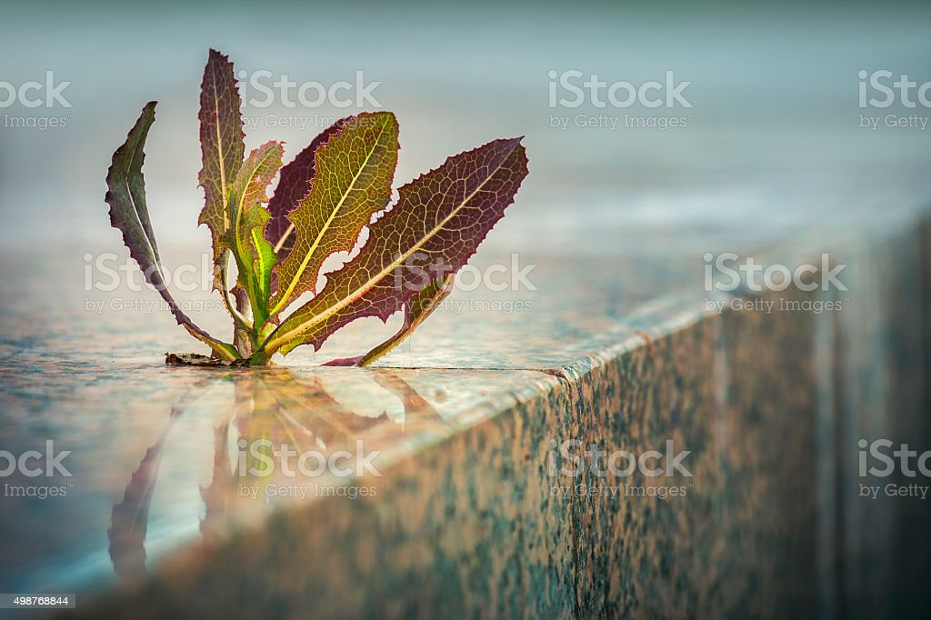 Spiky plant growing through pavement stock photo