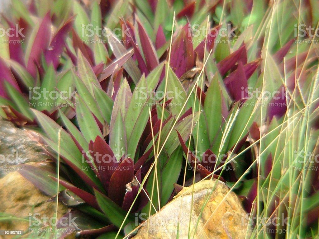 spiky plants royalty-free stock photo