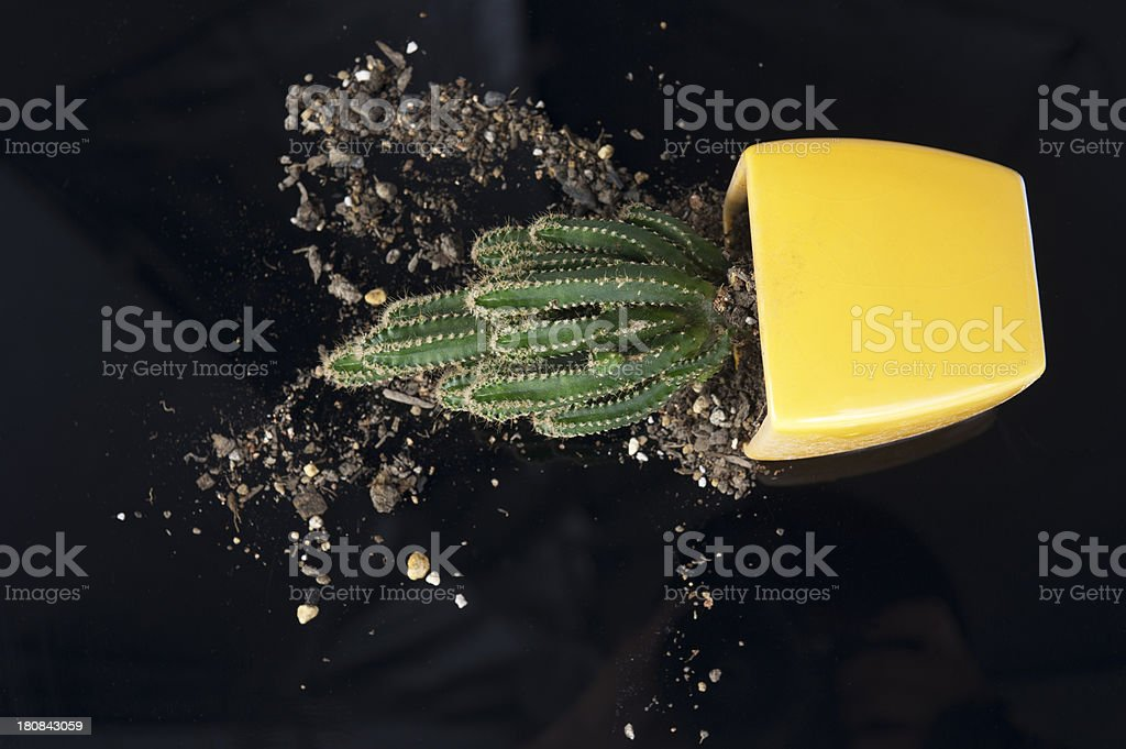 Spilled Cactus Flower Pot royalty-free stock photo
