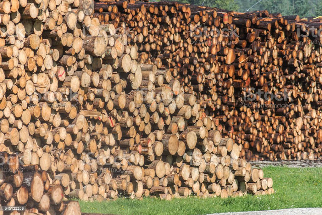 spilling many tree trunks stock photo