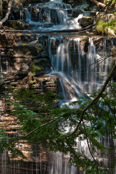 Spillway Falls and Hemlock Branch Here is a view the Fillmore Glen dam spillway on a mid-August afternoon, 2017.  Hemlock (Scientific Name: tsuga canadensis) branches fall across a waterfall of plentiful cascades.  Near Moravia in the Finger Lakes Region of New York State. michael stephen wills waterfall stock pictures, royalty-free photos & images