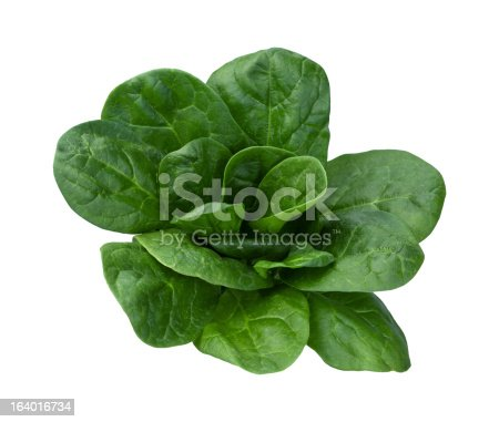 Fresh green spinach bunch. Spinach is vegetable  with large dark green leaves that are eaten raw or cooked as a vegetable. The image is shown at an angle, and is in full focus from front to back.