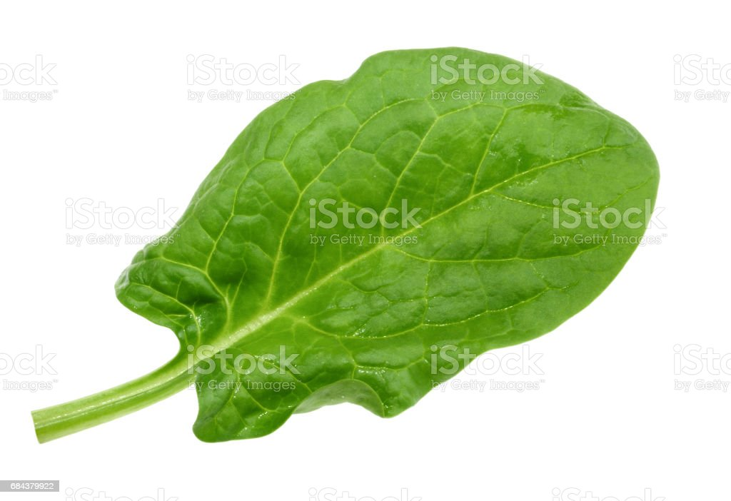 Spinach leaf close up isolated on white without shadow stock photo