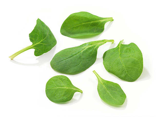 Spinach Leafs stock photo
