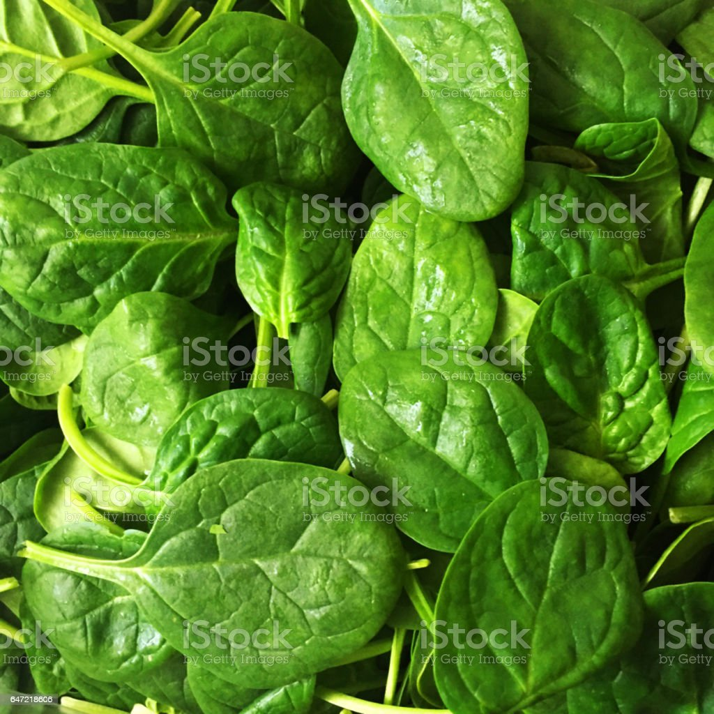 Spinach leaves full frame and macro pic stock photo