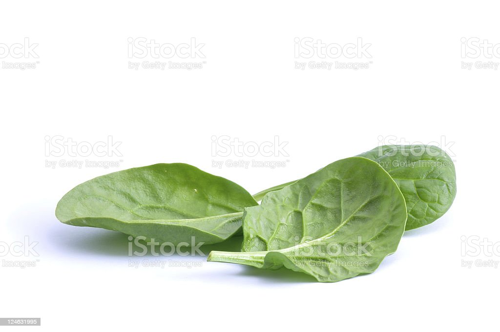 Spinach leaves stock photo