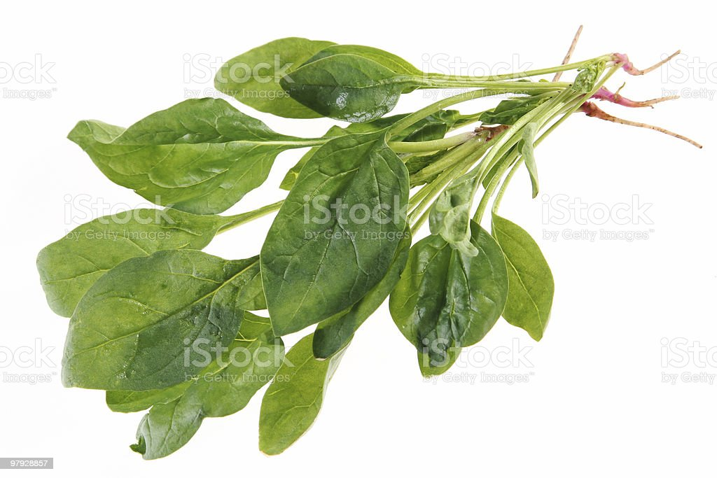 Spinach with root royalty-free stock photo