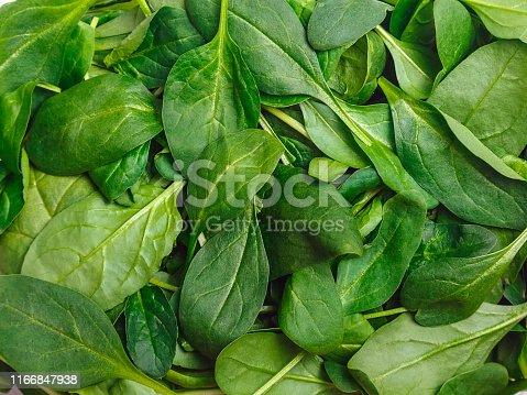 istock Spinacia oleracea. Fresh cut spinach leaves 1166847938