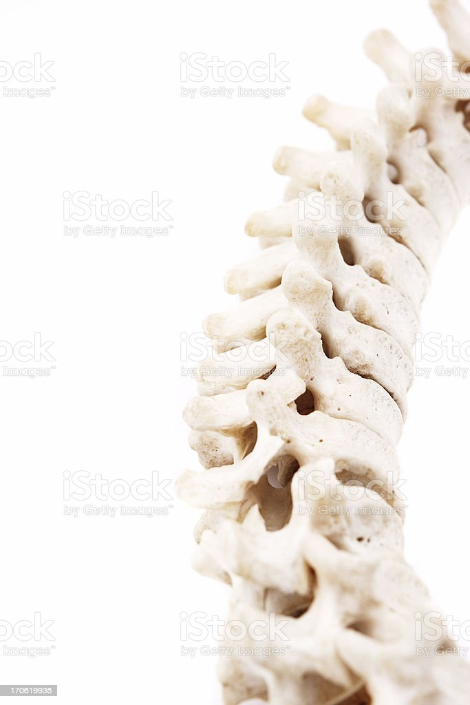 Spinal cord royalty-free stock photo