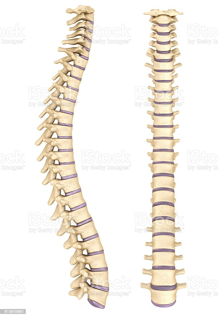 Spine Anatomy 3d Render Stock Photo More Pictures Of Anatomy Istock