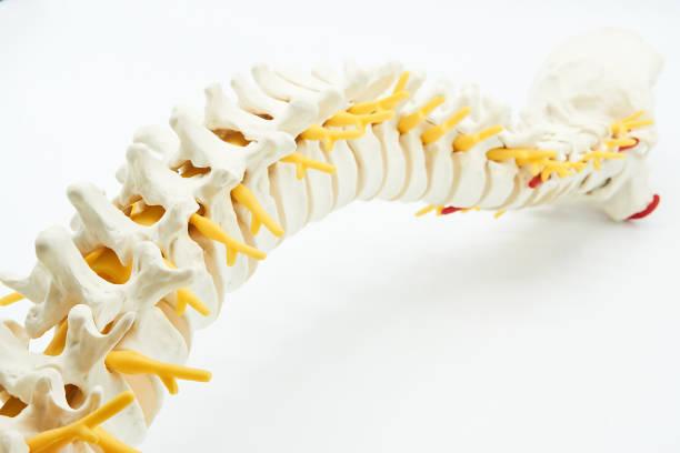 Spine stock photo