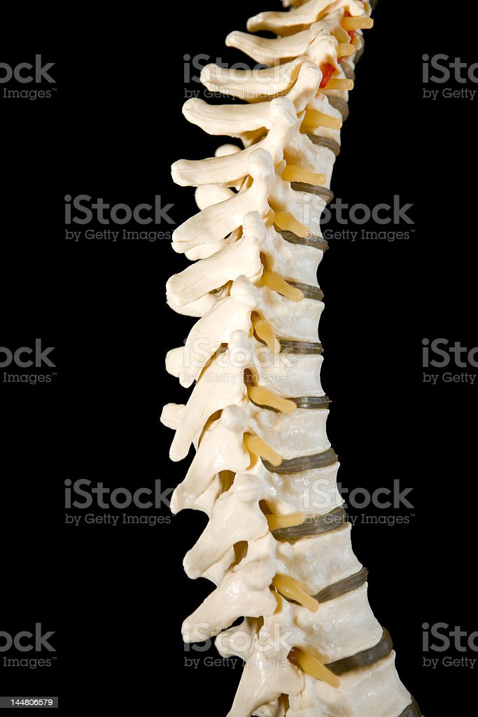 Spine royalty-free stock photo