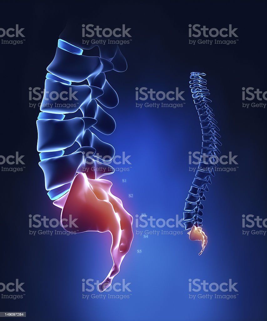 Spine sacral region anatomy in x-ray blue stock photo