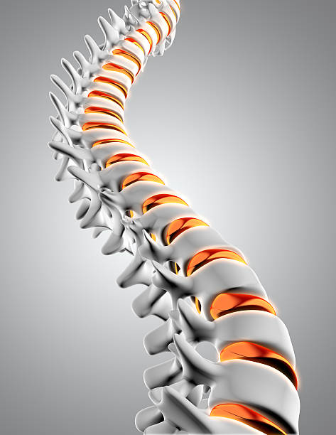 3D spine with discs highlighted stock photo