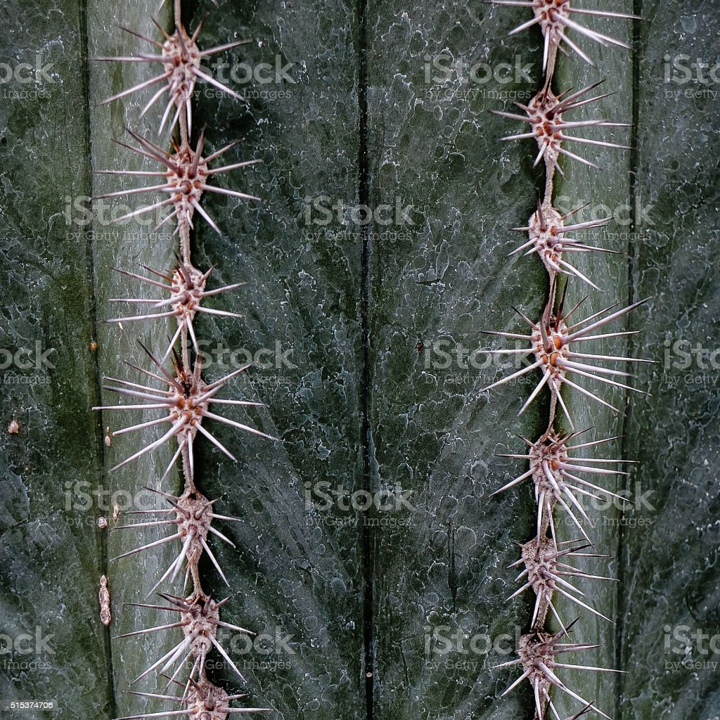 Spines stock photo