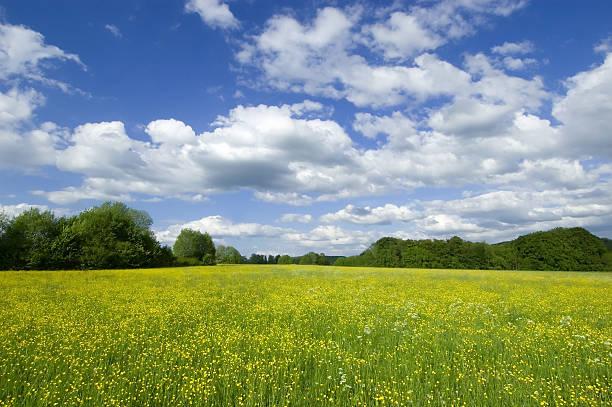 Frühling blühenden Feld – Foto