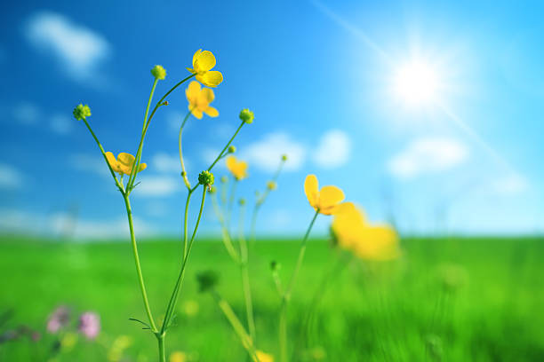 Sping Flowers - meadow stock photo