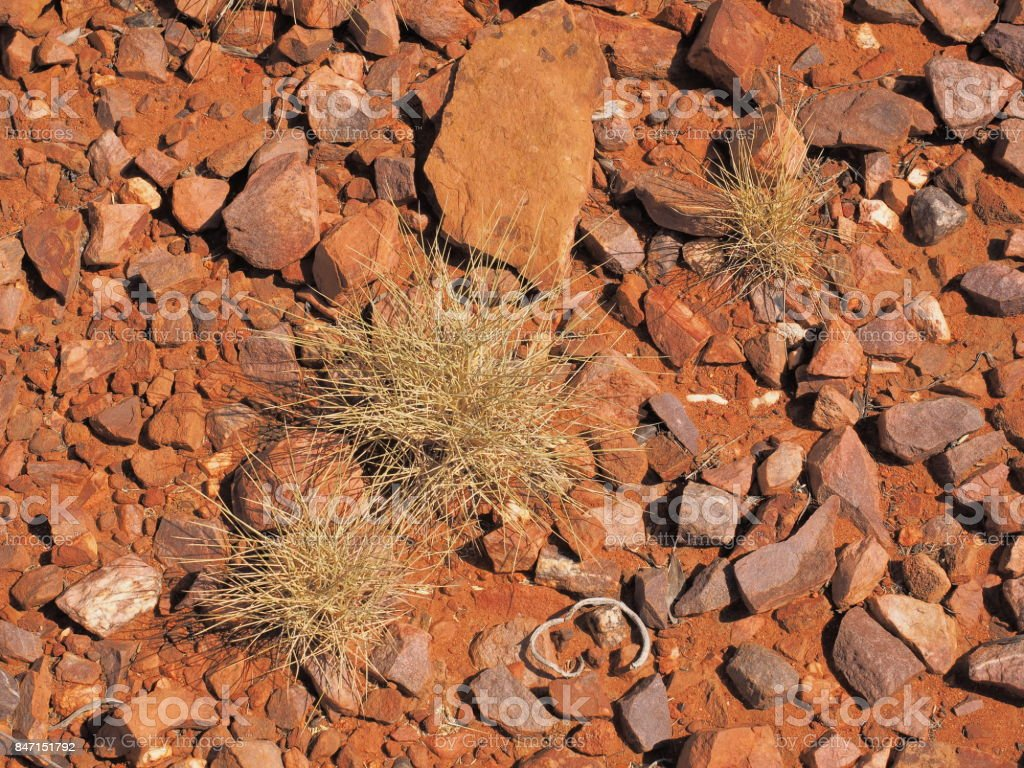 Spinifex  Triodia species on red rock surface at Trephina Gorge, east MacDonnell ranges near Alice Springs, Northern Territory, Australia 2017 stock photo