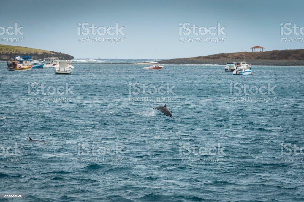 Spinner dolphin (Stenella Longirostris) stock photo