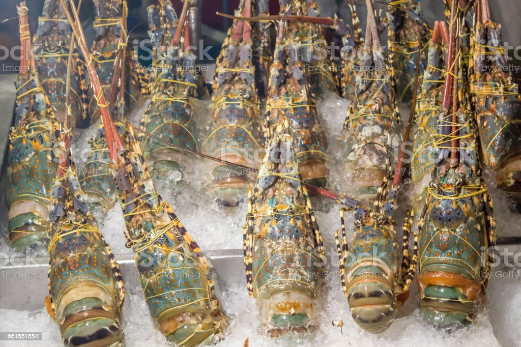 spiny lobster in ice tray royalty-free stock photo