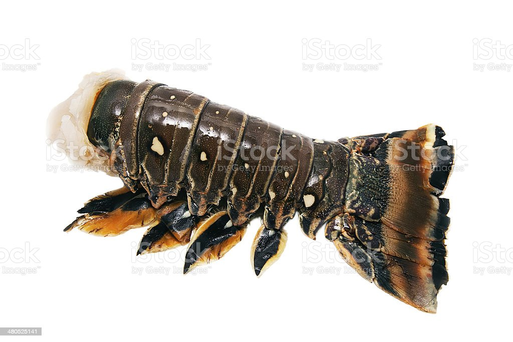 Spiny lobster tail stock photo