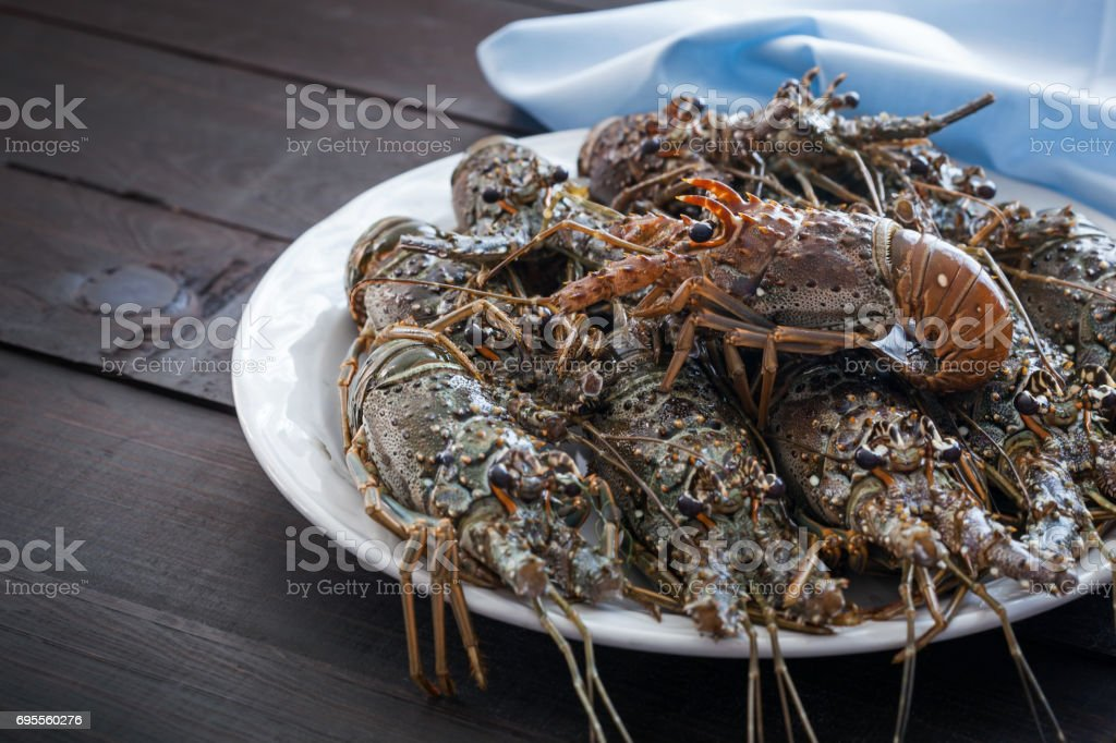 Spiny lobsters stock photo