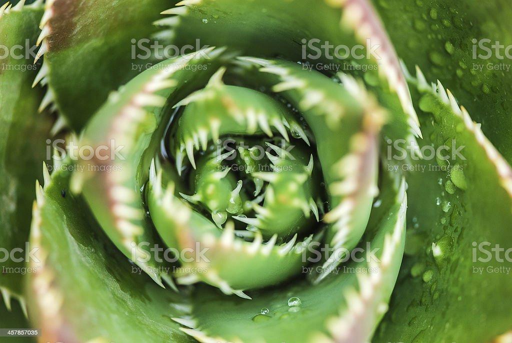 Spiny plant macro stock photo